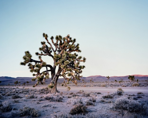 [Joshua Tree - Death Valley,*4x5 - USA
